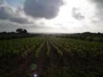 ornellaia winery
