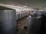 ornellaia winery (3)