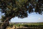 morellino landscape (1)