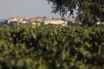 morellino landscape (2)