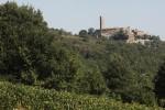 morellino landscape (3)