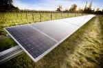 Solar Panels, Lodi Vineyard. Courtesy Goff Photography